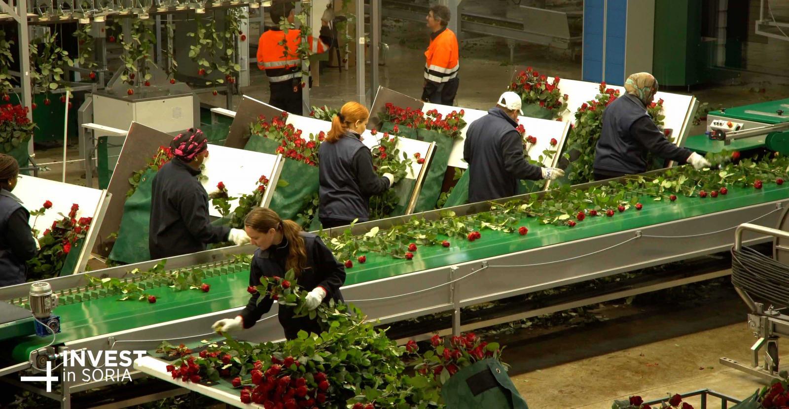 Frutas y vegetales/Flores/Fertilizantes
