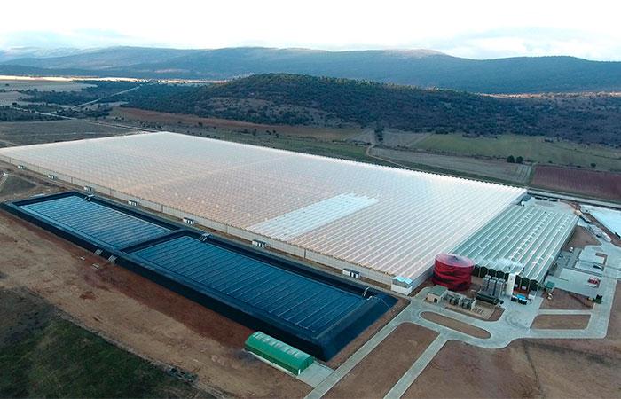 Aleia Roses se convierte en el mayor exportador de rosas de España