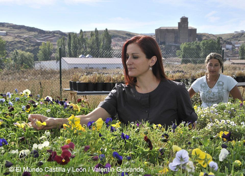 Flores comestibles made in Soria : Innoflower triplicará su producción